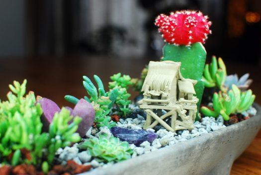 Little Pig Succulent Garden 06_Side view detail