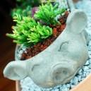 Little Pig Succulent Garden 07_Happy pig