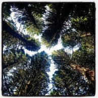 Hoyt Arboretum Portland Oregon