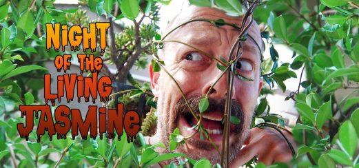 Night of the Living Jasmine 01_Feature Image Vesion 1
