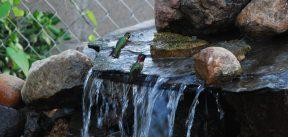 Everything is in Bloom 014_Hummingbirds taking baths