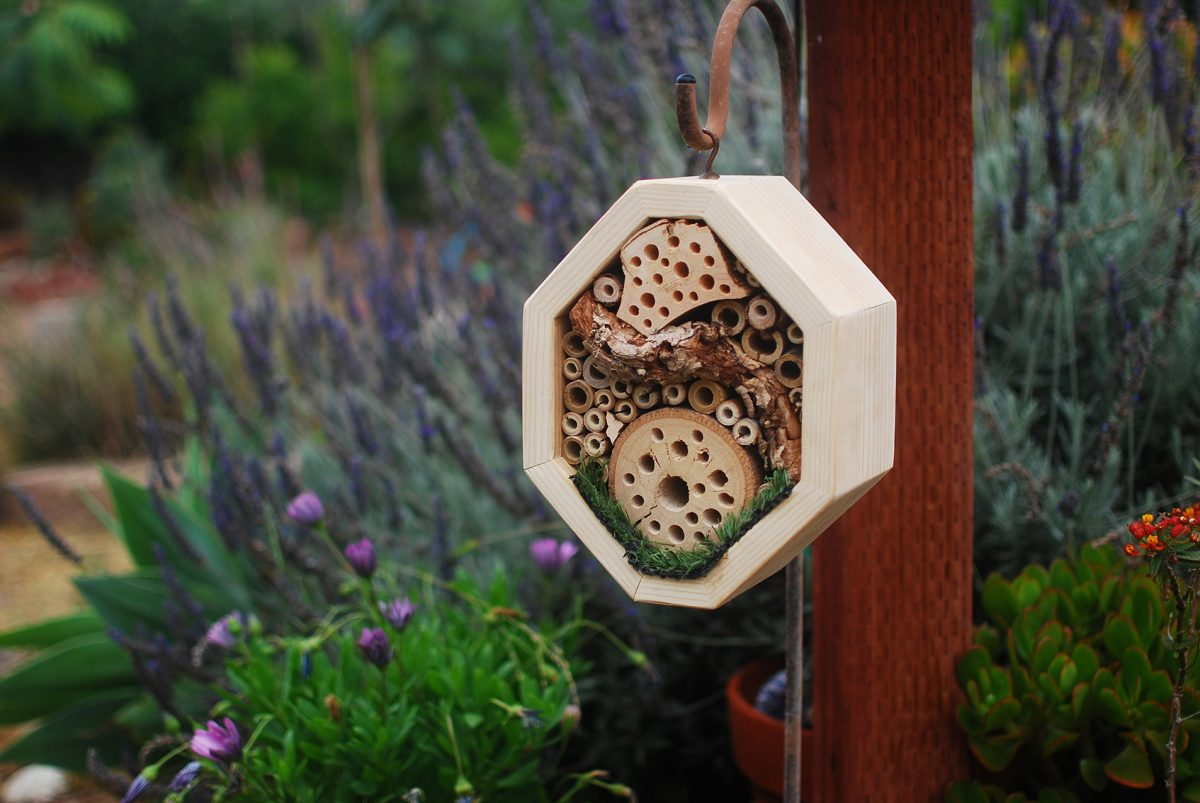 We Have a Vacancy: Building a Bug Hotel for Solitary Bees