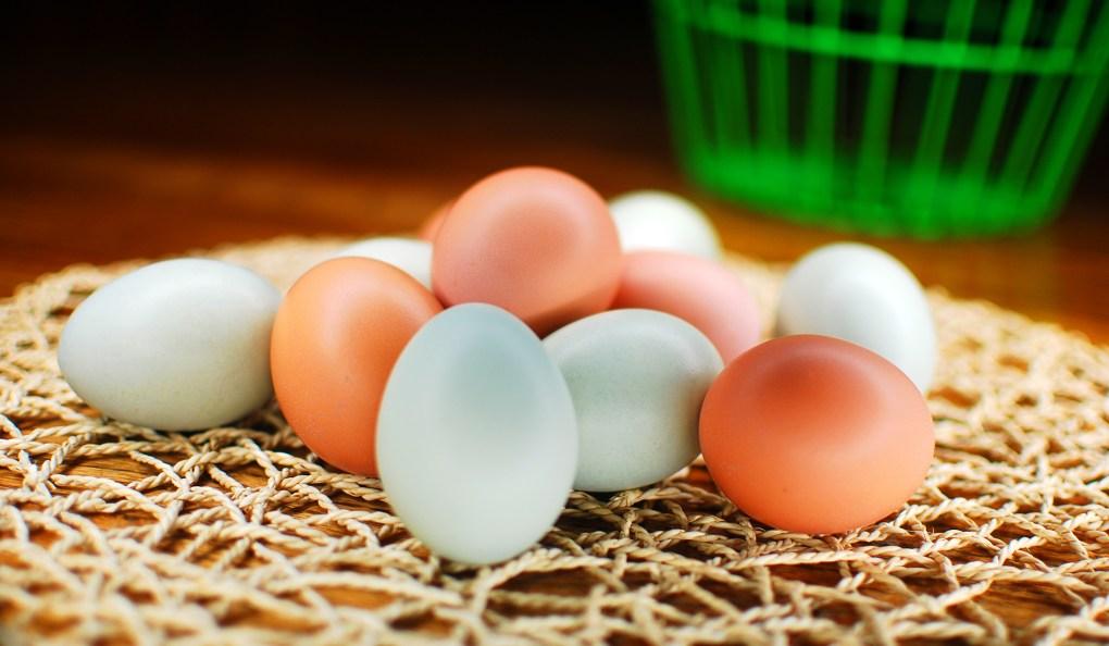 Rhode Island Red and Easter Egger eggs.