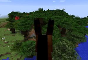 ダークオークの森