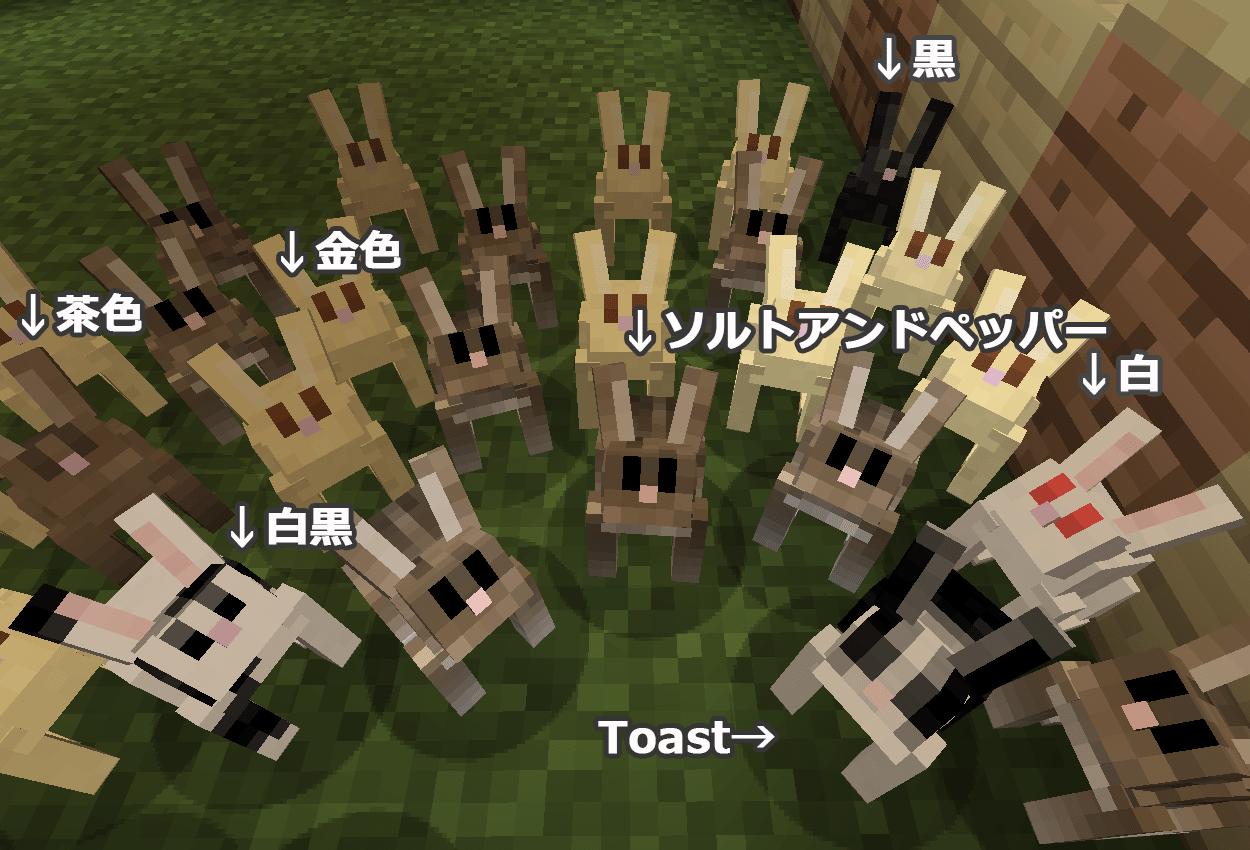 ウサギ全6色+Toast
