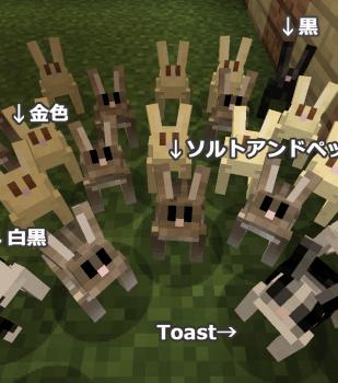 全色入りウサギ小屋作りました