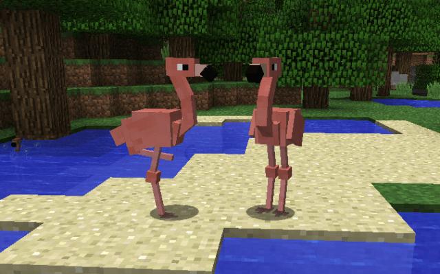 exotic-birds-3