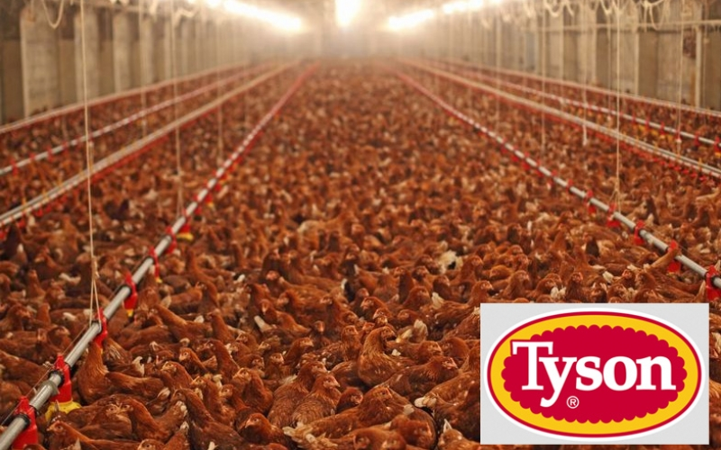 Tyson Foods invests in Beyond Meat: what gives?