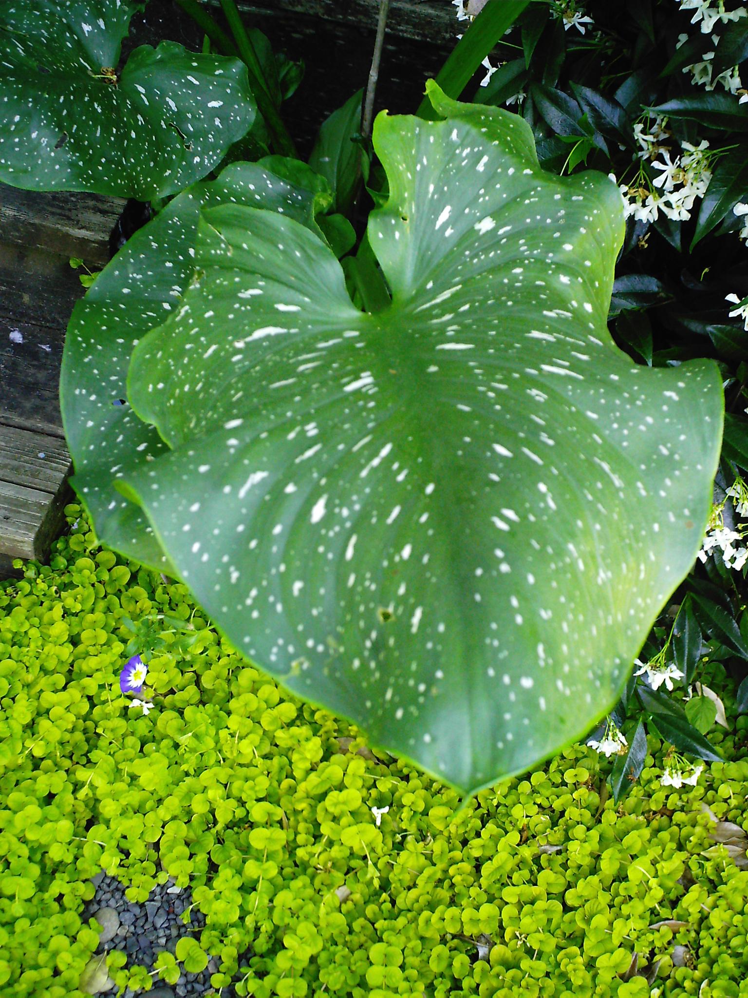 Annuals  Minervas Garden Blog