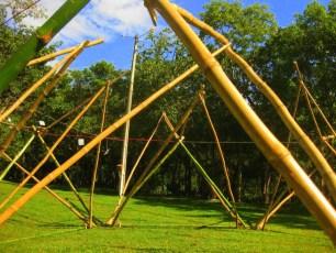 Bamboo_20120410_042
