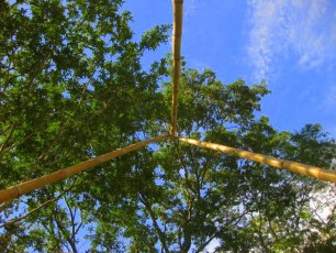 Bamboo_20120410_049