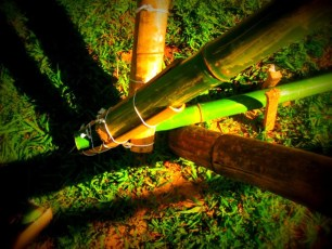 Bamboo_20120410_059