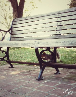 Squirrel Pavilion