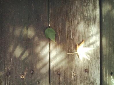 Autumn's Messenger