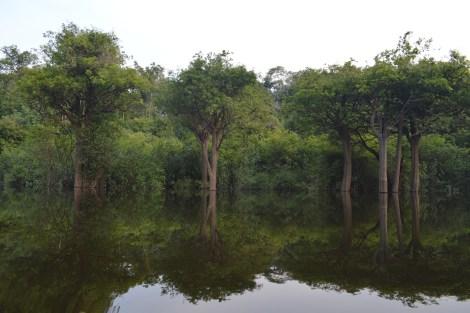 As árvores e seus reflexos no Rio Solimões, Manaus, 2014, por LP