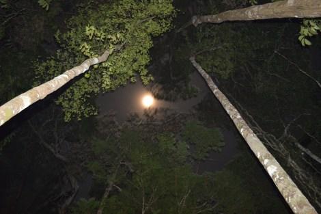 A noite na selva, Amazônia, 2014, por LP