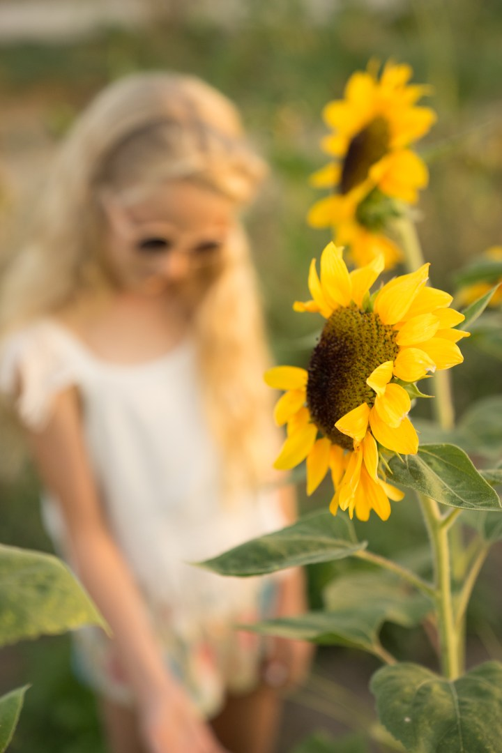 Love Sunflowers (21 of 32)
