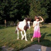 Mini gypsy geldings make great pets!