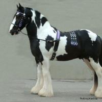 Stallion Tack