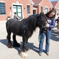 2014 Illinois Horse Fair