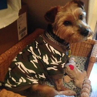 [USD $ 7.99]  - Pet Camouflage T-shirts With Short Sleeves for Pet Dogs (Assorted Sizes and Colors)