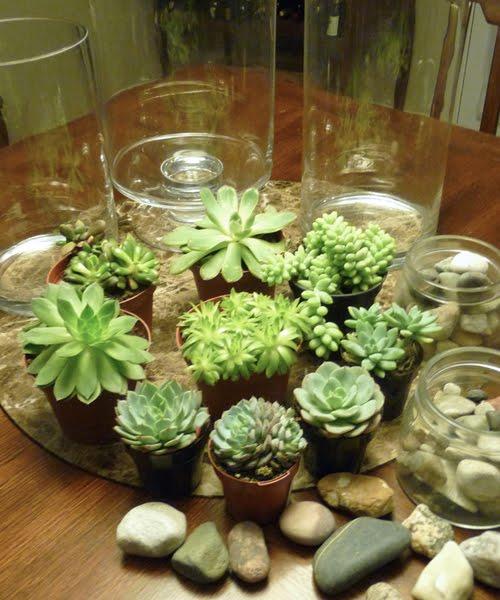 Terrrios  Jardins em Miniatura  Pgina 3