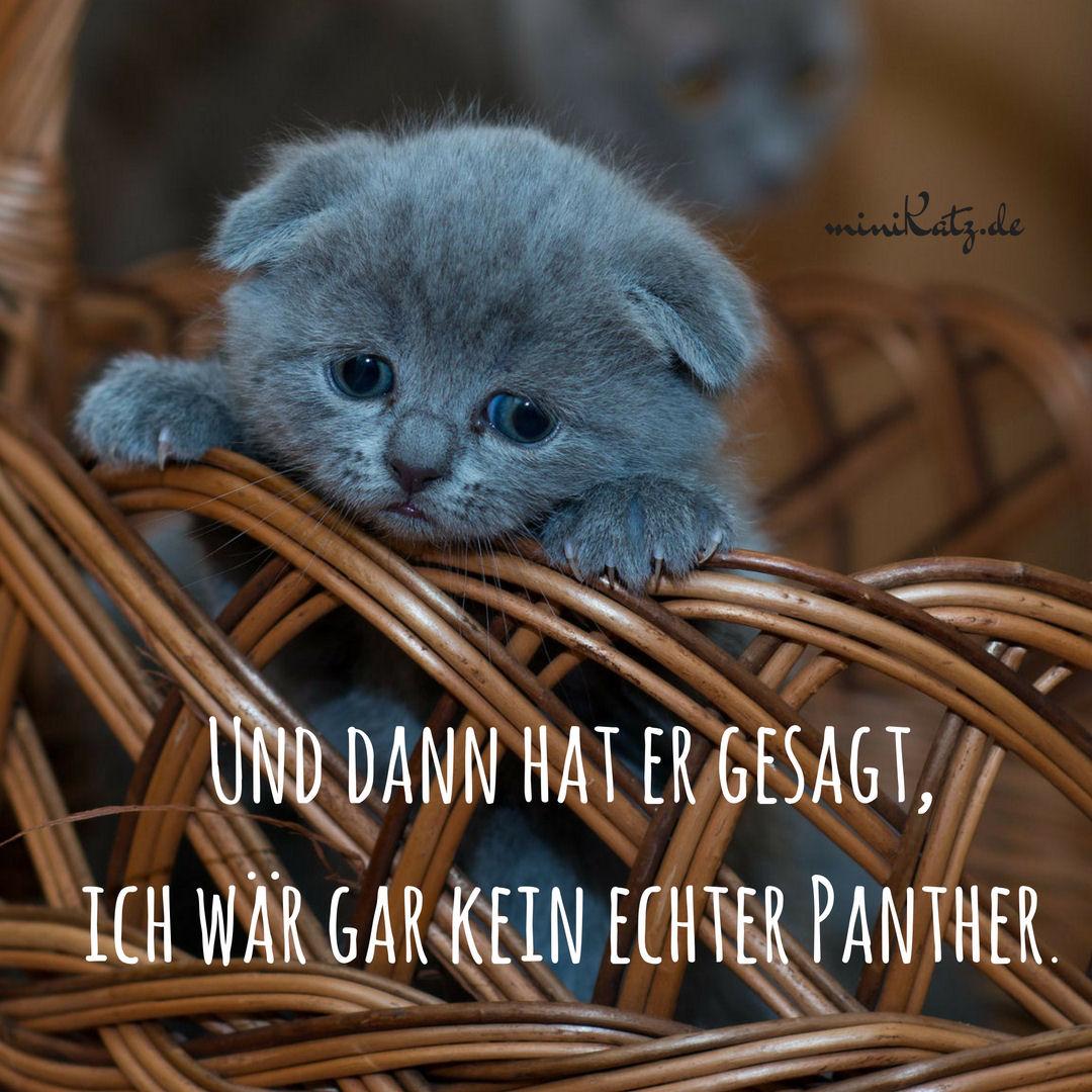 Zitate und Sprüche rund ums Thema Katzen -