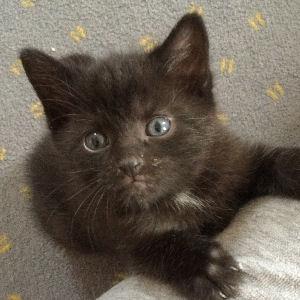 miniKatz - liebevolle Pflege von ausgesetzten und mutterlosen Katzenbabys