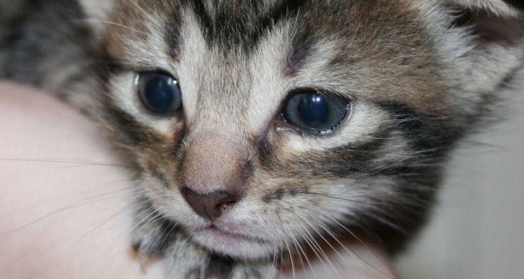 miniKatz - Altersbestimmung und Entwicklung von Katzenbabys