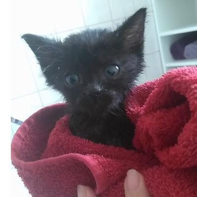 Pflege und Versorgung von Katzenbabys