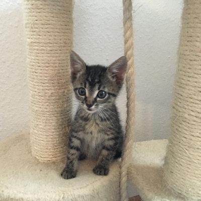 Eine Katze kommt ins Haus - welche Grundausstattung braucht man?