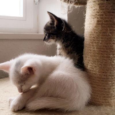 Erkältung bei Katzen