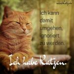 Sprüche und Zitate rund ums Thema Katzen.