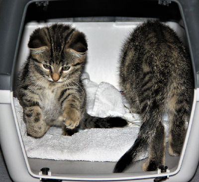 Grundausstattung für ein Katzenbaby