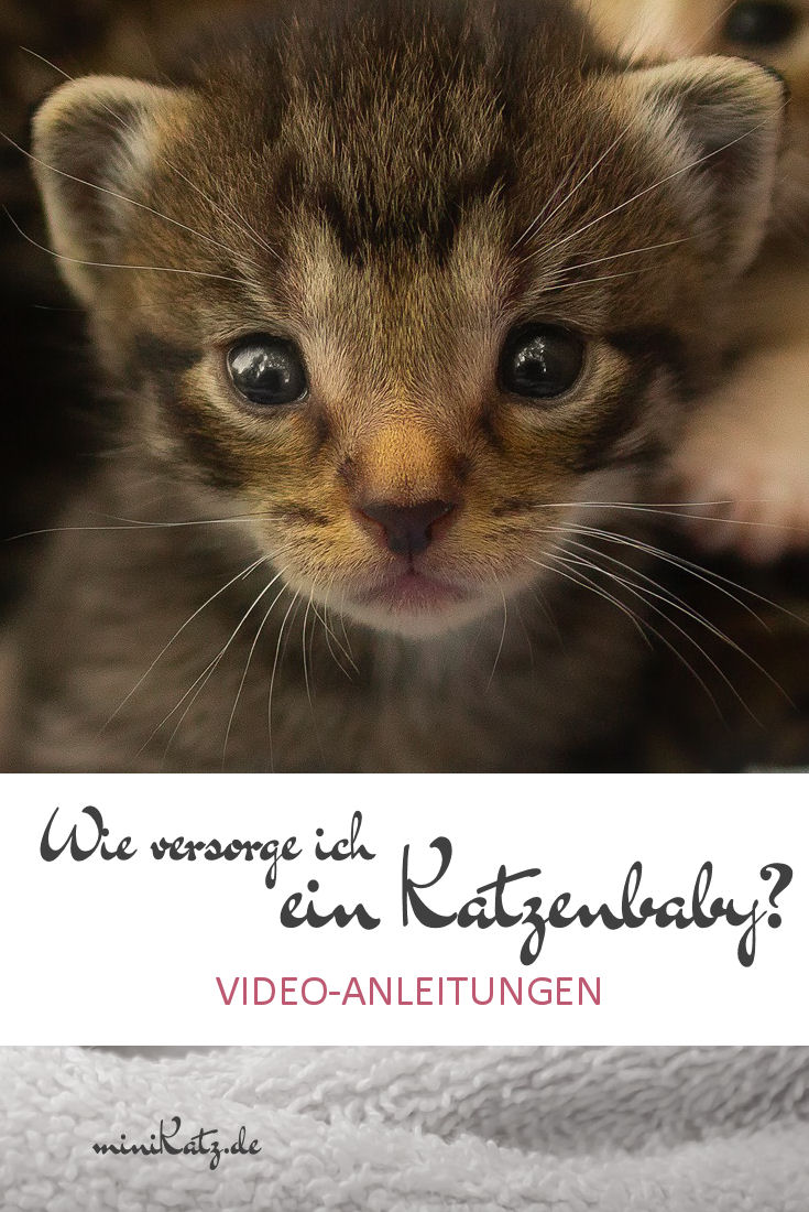Versorgung von Katzenbabys - Videoanleitungen