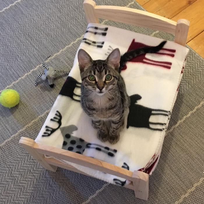ikea hack ein zuckers es katzenbett. Black Bedroom Furniture Sets. Home Design Ideas