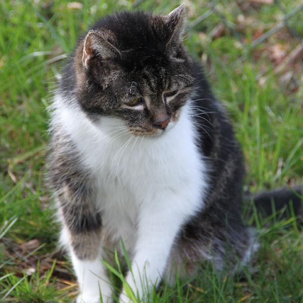 Auch alte Katzen brauchen Liebe.