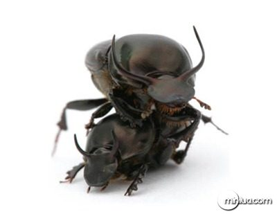 a97067_g042_4-insect