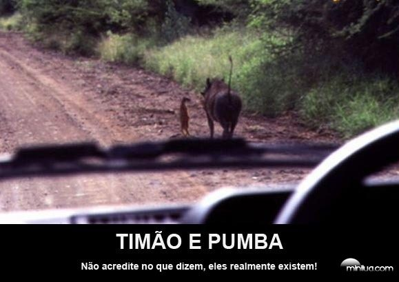 timao_e_pumba