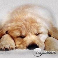 cachorro_dormindo