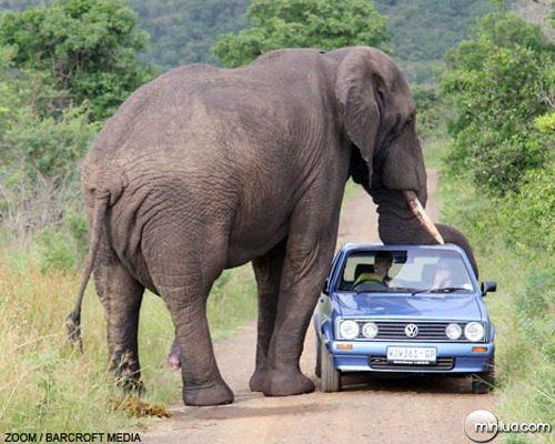 oh-elephant