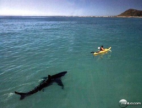 oh-shark-2