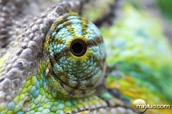 olho do camaleao
