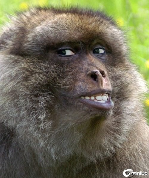 Smiling-Monkey--21616
