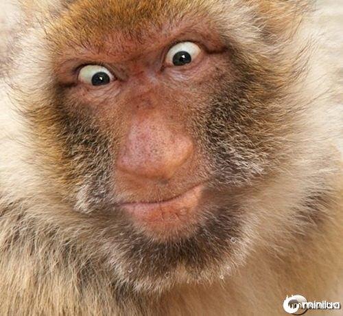 monkey-man--21623