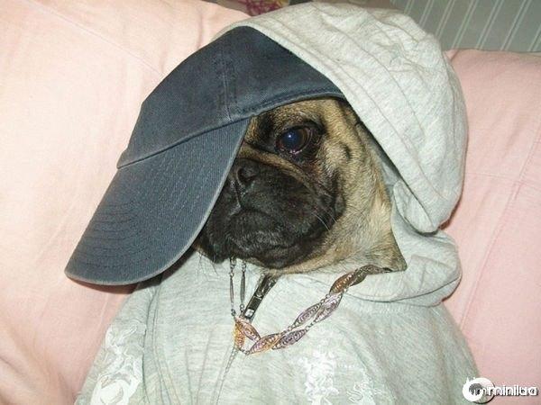 gangster_pugs_640_04