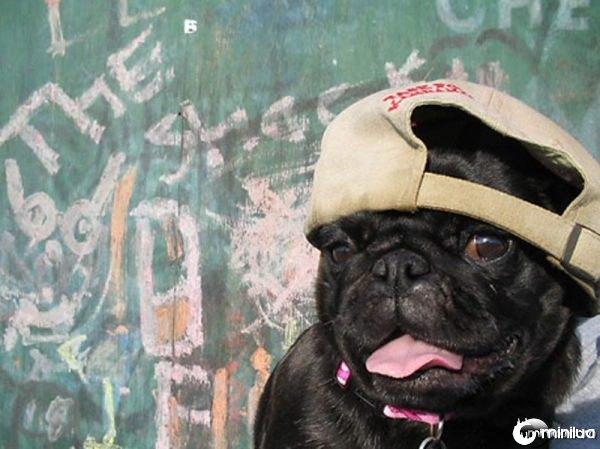 gangster_pugs_640_06