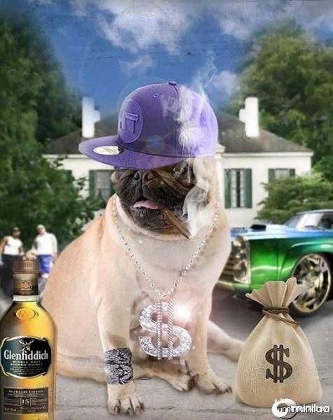 gangster_pugs_640_07
