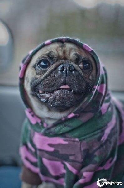 gangster_pugs_640_10