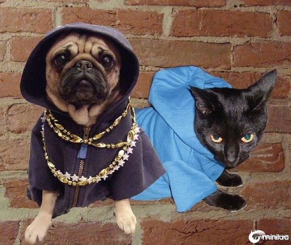 gangster_pugs_640_16